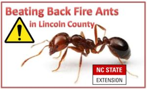 Cover photo for Controlling Fire Ants - VIDEO!