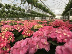 Cover photo for Register for Greenhouse Workshop on February 5