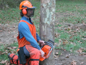 Cover photo for Tree Cleanup and Chainsaw Safety Class