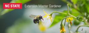 Cover photo for 2021 Extension Master Gardener Class - Begins September 1!